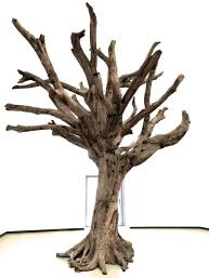 Tree Ai Weiwei